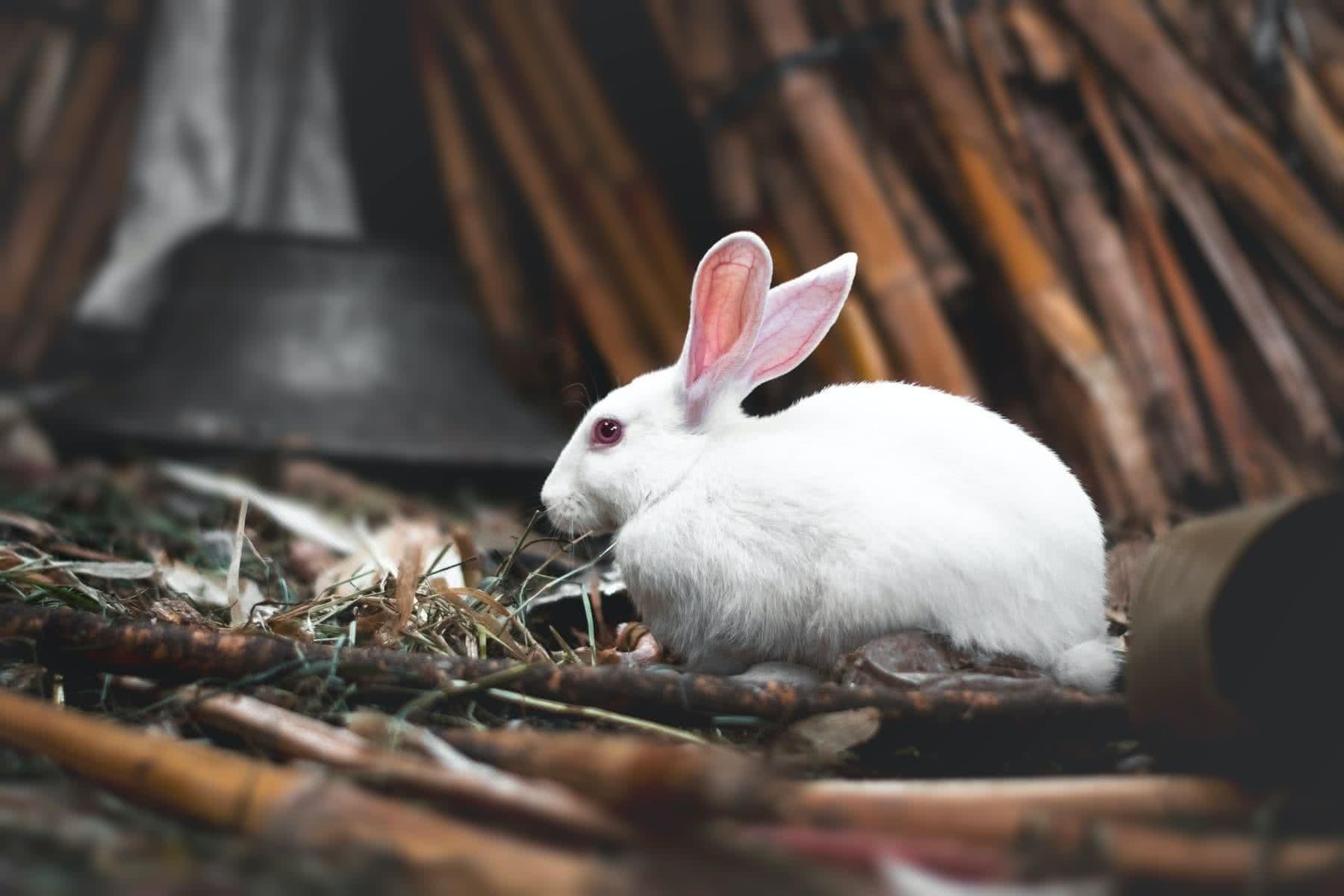 Conejo blanco en medio de la naturaleza. Foto de Hossam M. Omar en Unsplash