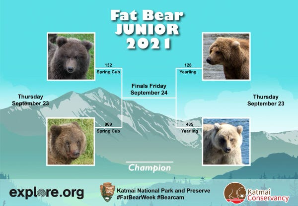 the Fat Bear Junior 2021 bracket with four pictures of bear faces- 132 spring cub vs 909 spring cub  and 128 yearling vs 435 yearling both on Sept 23 with finals Friday Sept 24, logos for explore.org, National Park Service and Katmai Conservancy below