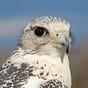 Shepherd Alaska - Monitoring Change in Extraordinary Times