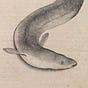 Bucket of Eels