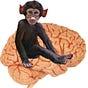 Inner Mammal Institute Newsletter