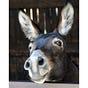 Okay Donkey Press Newsletter