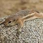 The Verdin: Desert Environmental News