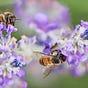 Bee Scolding With Karen & Sophie
