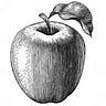 Apple Weekly