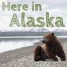 Here in Alaska