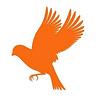 This Week in Birding