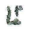 lichen practice