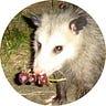 Possum Notes